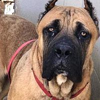 Adopt A Pet :: Geno - Killeen, TX