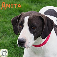 Pointer Mix Dog for adoption in Washburn, Missouri - Anita