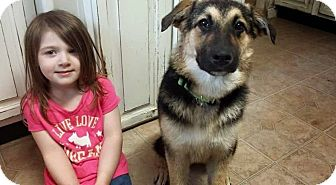 German Shepherd Dog/Chow Chow Mix Dog for adoption in Syracuse, New York - Finley