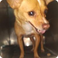 Adopt A Pet :: Zona-Chipped - Decatur, GA