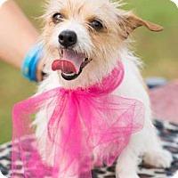Adopt A Pet :: Jello - Santa Fe, TX