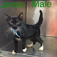 Adopt A Pet :: Lance - Waycross, GA