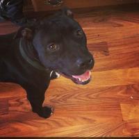 Adopt A Pet :: Gabbi - New Orleans, LA