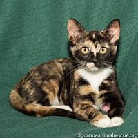 Adopt A Pet :: Sophie - Big Canoe, GA