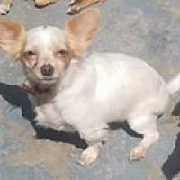 Adopt A Pet :: Joey - Encino, CA