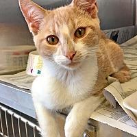Adopt A Pet :: Dilly - East Brunswick, NJ