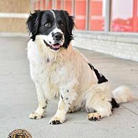 Adopt A Pet :: Alfie - Mt. Vernon, IN