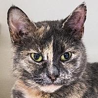 Adopt A Pet :: Lila - Fairport, NY