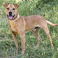 Adopt A Pet :: Wally - Monterey, CA