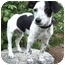 Photo 2 - Jack Russell Terrier/Rat Terrier Mix Puppy for adoption in Provo, Utah - LIZZY