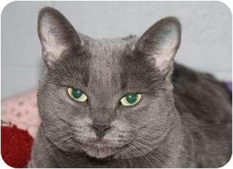 Domestic Shorthair Cat for adoption in Pincher Creek, Alberta - Sheeba