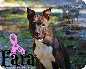 American Pit Bull Terrier Mix Dog for adoption in Orlando, Florida - Fara
