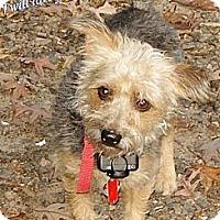 Adopt A Pet :: Michelle Adoption pending - Franklinton, NC