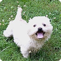 Adopt A Pet :: Skeeter - Mocksville, NC