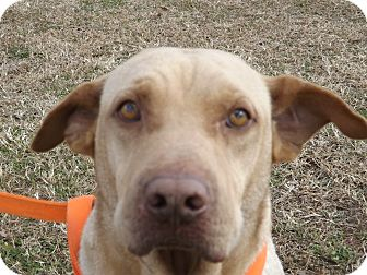 Hound (Unknown Type) Mix Dog for adoption in Thomaston, Georgia - Oscar Lee