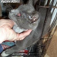Adopt A Pet :: Quinn - Hazard, KY