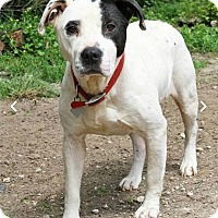 Adopt A Pet :: Joyous Jensen - Houston, TX