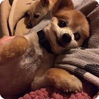 Adopt A Pet :: Roxie - Homewood, AL