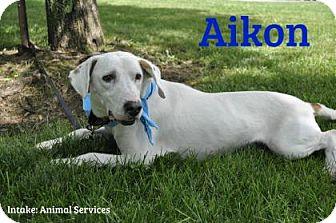 Hound (Unknown Type) Mix Dog for adoption in Hamilton, Ontario - Aikon