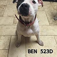 Adopt A Pet :: Ben - Spring, TX