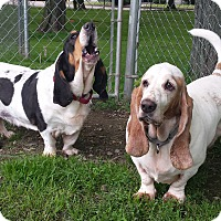 Adopt A Pet :: Charlie - New Kensington, PA