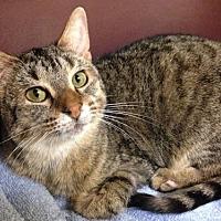 Adopt A Pet :: Nina - Bloomington, MN