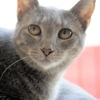 Adopt A Pet :: Mamma - Pequot Lakes, MN