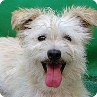 Adopt A Pet :: Baxter - San Diego, CA