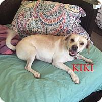Adopt A Pet :: KIKI - Ventnor City, NJ