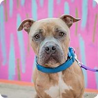 Adopt A Pet :: Lefty - St. Louis, MO