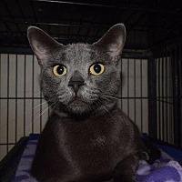 Adopt A Pet :: Alexzia - Saginaw, MI
