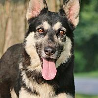 Adopt A Pet :: Leeza - Nashville, TN