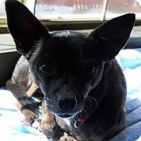 Adopt A Pet :: Evie - dewey, AZ