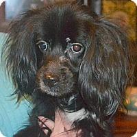 Adopt A Pet :: Wags - Greensboro, NC
