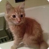 Adopt A Pet :: Floyd - Brooklyn, NY