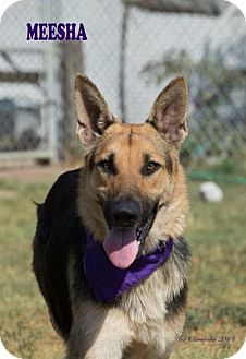 German Shepherd Dog Mix Dog for adoption in Walnut Creek, California - Meesha