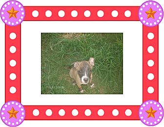 Terrier (Unknown Type, Small) Mix Puppy for adoption in KELLYVILLE, Oklahoma - ARGIE