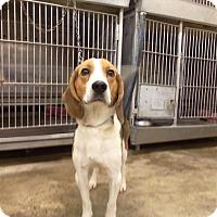 Adopt A Pet :: Buck - Upper Sandusky, OH
