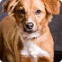 Adopt A Pet :: River - Owensboro, KY
