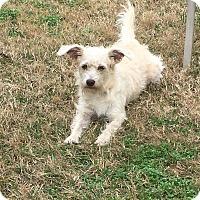 Adopt A Pet :: Richmond - Norwalk, CT
