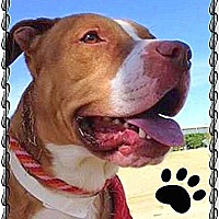 Adopt A Pet :: TEDDY (aka Theo) - Higley, AZ
