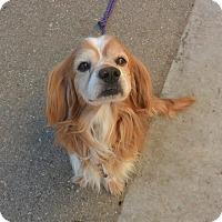Adopt A Pet :: Gerald - Meridian, ID