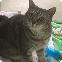 Adopt A Pet :: Lilac - Baltimore, MD