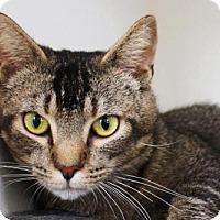 Adopt A Pet :: Mr. Squirrelman - Philadelphia, PA
