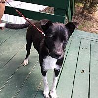 Adopt A Pet :: Jackson - Orangeburg, SC
