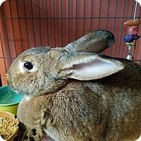 Adopt A Pet :: Pluto - Lancaster, PA