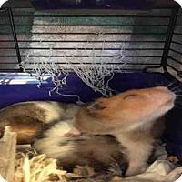 Adopt A Pet :: A776949 - Toronto, ON