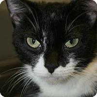 Adopt A Pet :: Quiche - Potsdam, NY