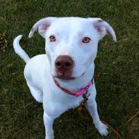 Adopt A Pet :: Glitter - West Allis, WI