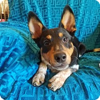 Adopt A Pet :: Hansel  (has been adopted) - Hagerstown, MD